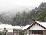 Snow_080105