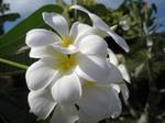 Flower_080129