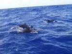 Dolphin_070722