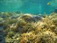 サンゴの群生 in 御神崎北