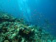 サンゴの群生 in プロビデンス
