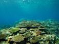 サンゴの群生 in サバ沖ヒルズ