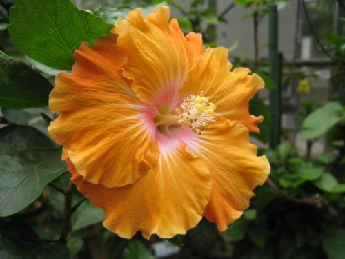 Botanicalgarden_091017_2