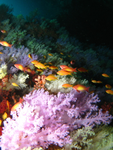 Softcoral_100121_2