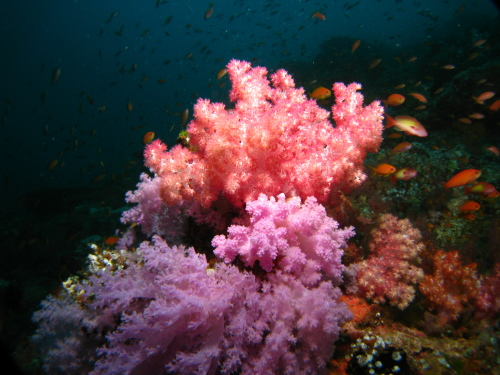 Softcorals_100120