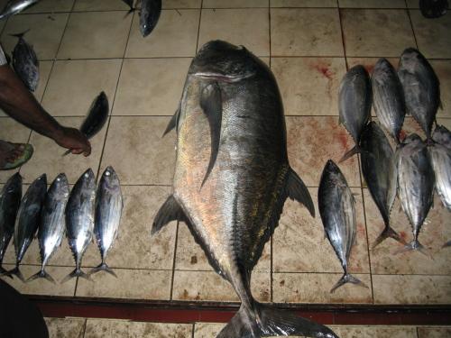 Fishmaeket_100316_4