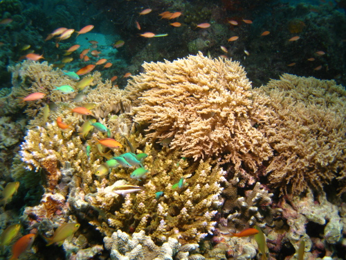 Corals_100517_1