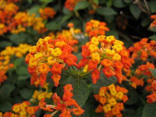 Flower_101129