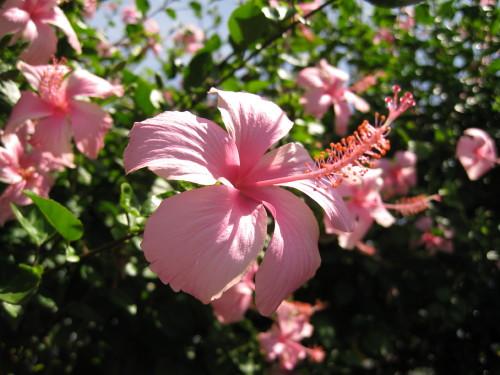 Flower_110203_1